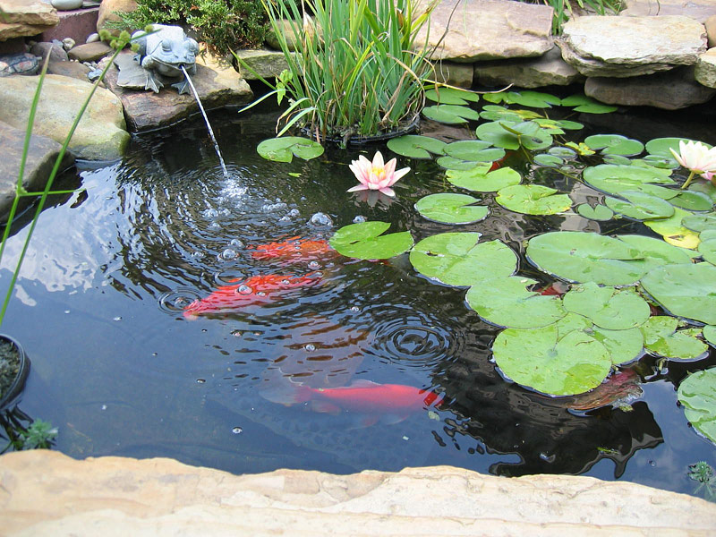 Koi smart the smart place for pond supplies for Koi pond store